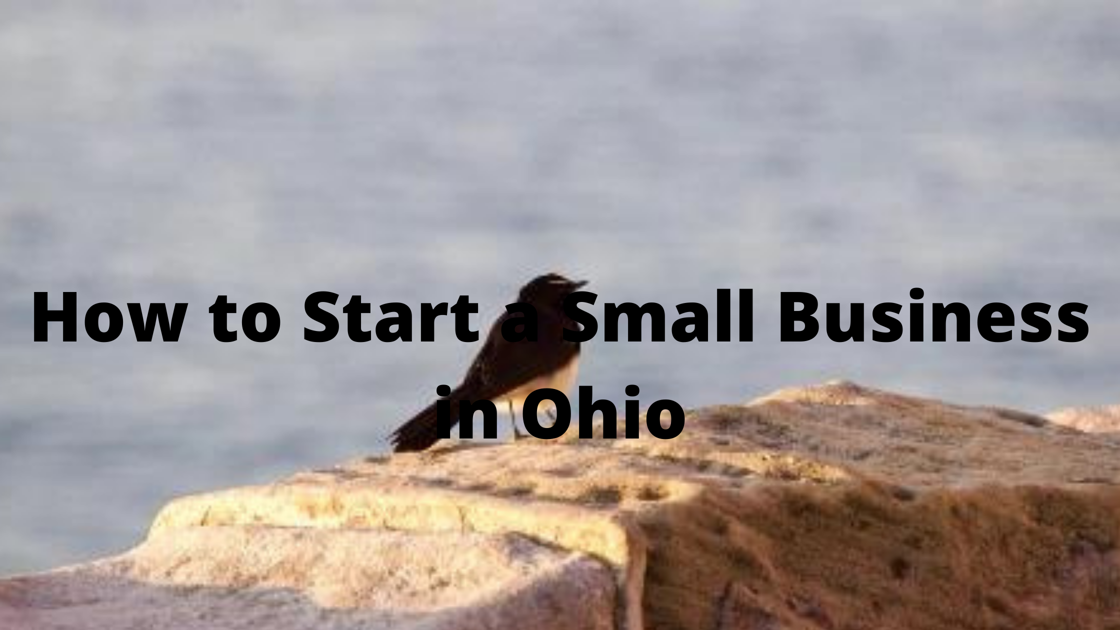 You are currently viewing How to Start a Small Business in Ohio
